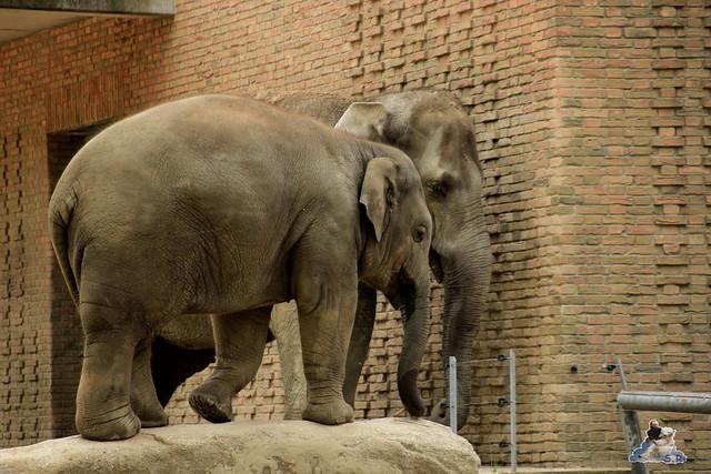 Zoo Berlin 19.05.2015  9