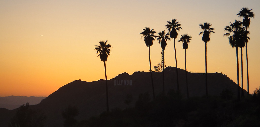 Palm Trees Hollywood Hollywood Hills Palm Trees