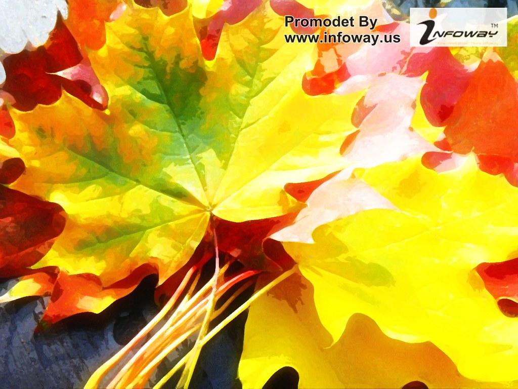 images of 3d falling leaves screensaver calto