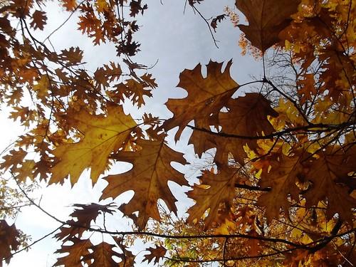 That autumn look.
