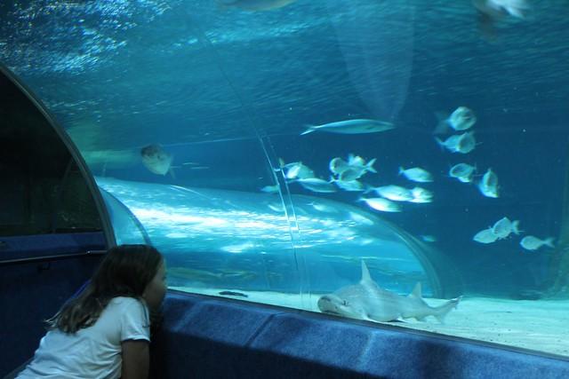 Tarryn meet shark at National Aquarium of New Zealand at Napier ...