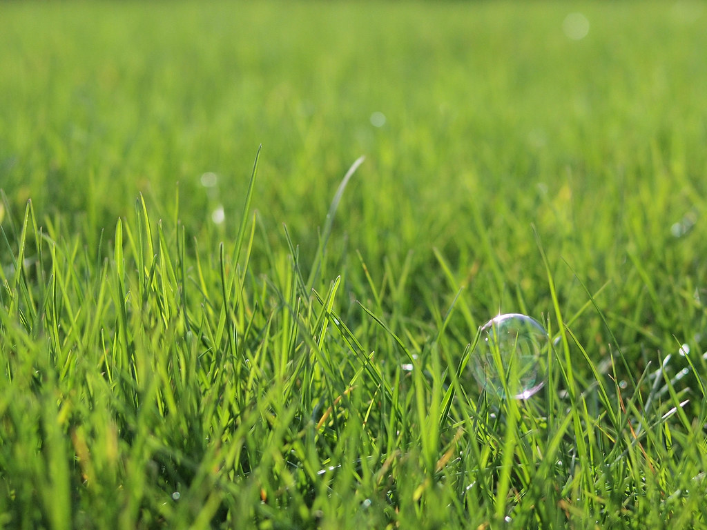 Bubble grass | Another grass shot I know. Busy day today ...