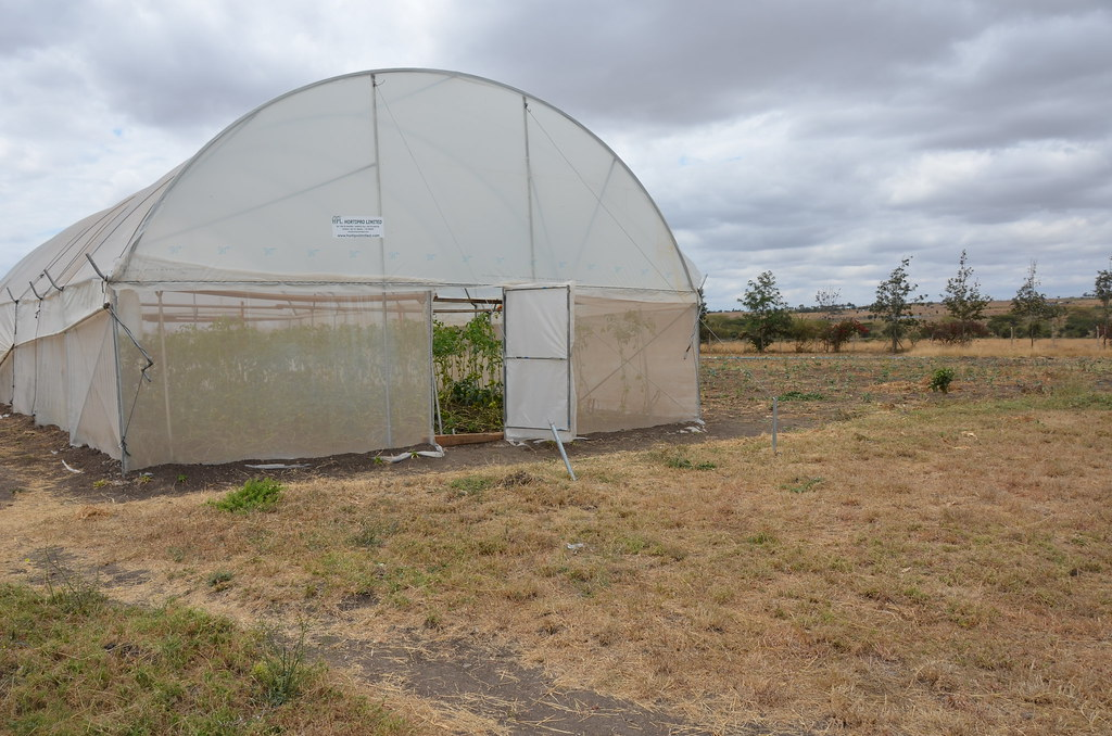Greenhouse Farming In Kitengela Kenya A Number Of