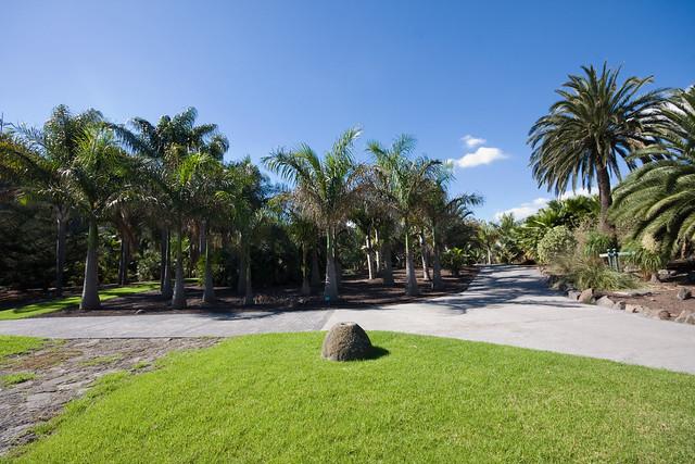 El jard n bot nico viera y clavijo jard n canario en - Jardin botanico las palmas ...