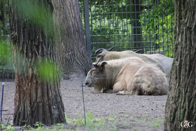 Tierpark Friedrichsfelde 17.05.201526
