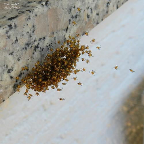 Bunt ist die Welt: Insekten