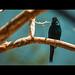 bird 4_82