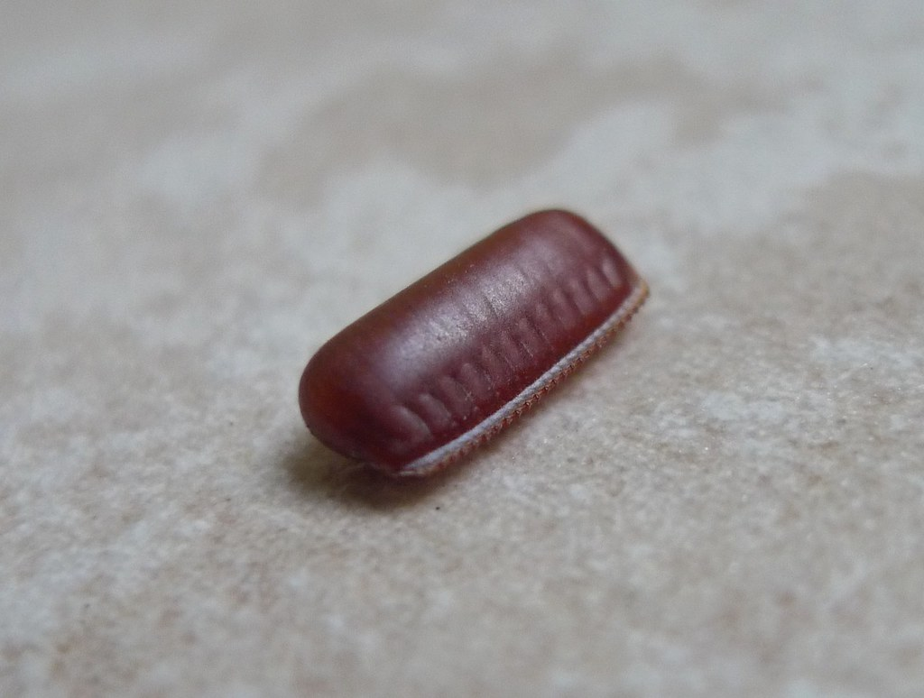 how to kill cockroach egg sac