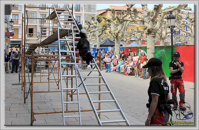 Feria de Asociaciones en Briviesca (1)