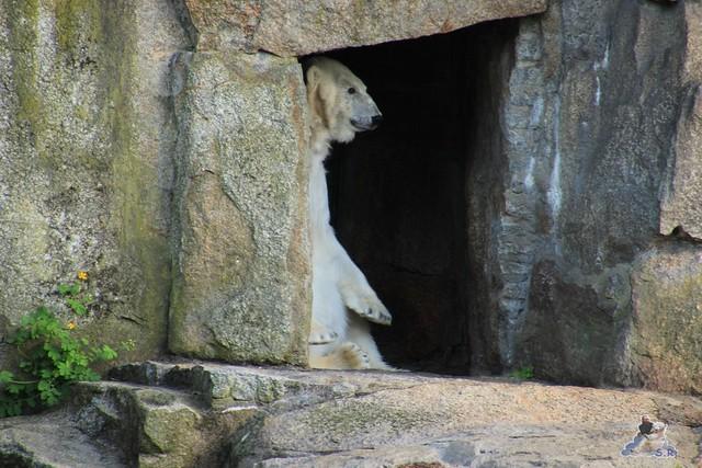 Zoo Berlin 19.05.2015  87