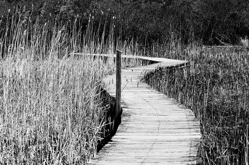 Hellcat Swamp Marsh Loop