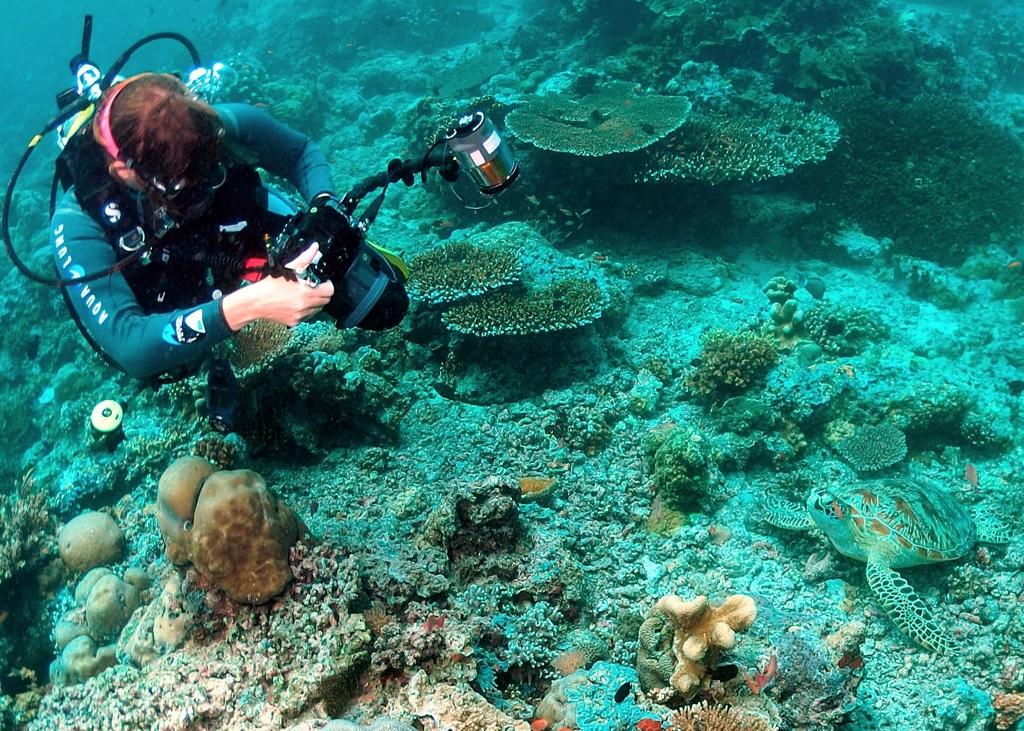 Diver and turtle dive site barracuda point sipadan - Sipadan dive sites ...