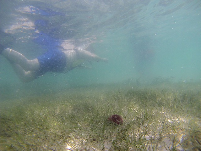 Snorkeling Gasparilla Sound with the Charlotte Harbor Aquatic Preserves, Placida, Fla., May 19, 2015
