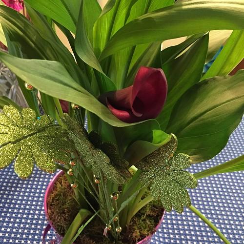 141:365 Beautiful purple calla lily from my husband's boss.