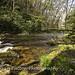 wCataloochee_Creek