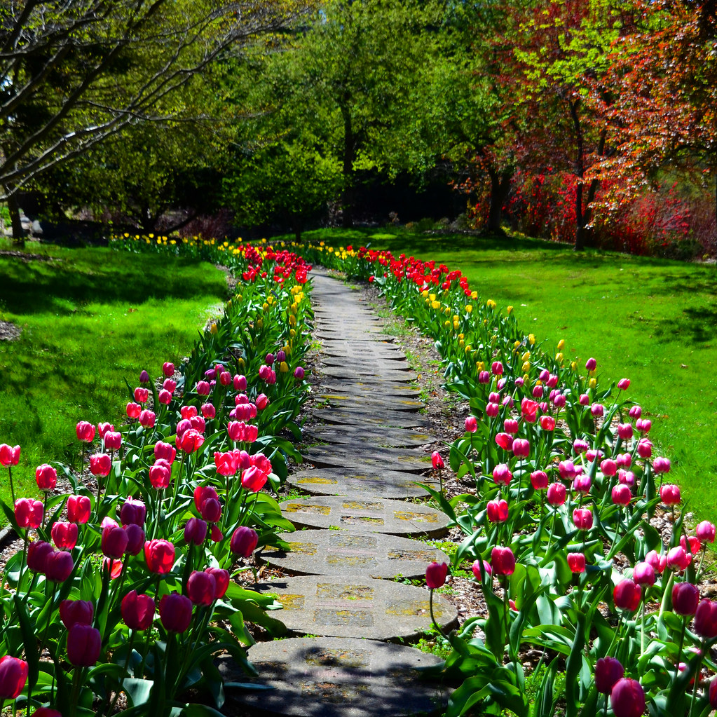 Tulip Lined Path Just One Of The Many Beautiful Scenes