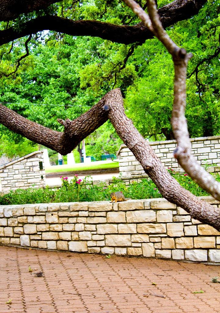 Tree Tipi Landa Park New Braunfels Tx Nelson Spies