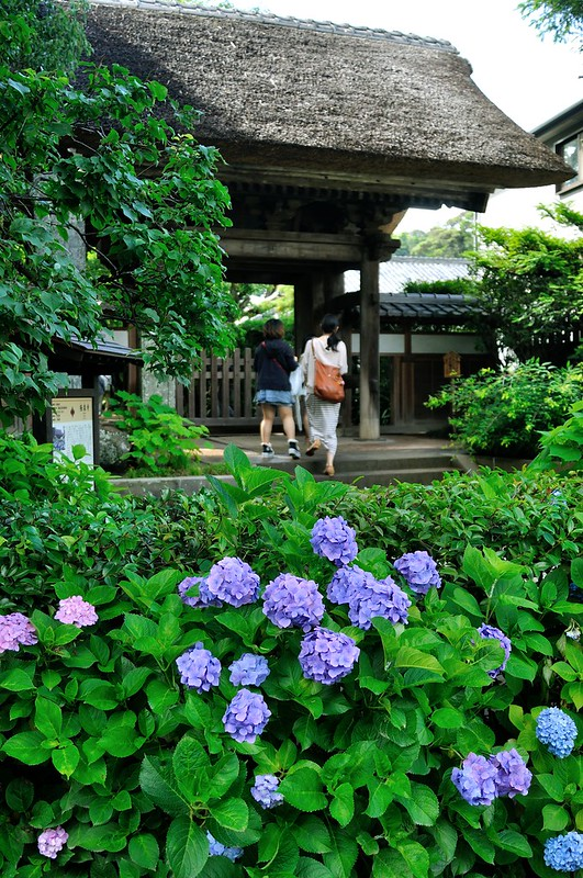 極楽寺 鎌倉