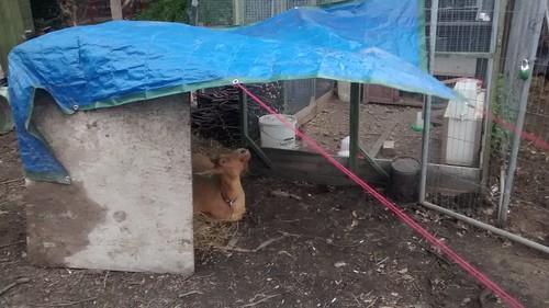 goats May 15 18