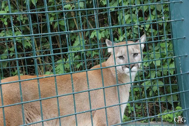 Tierpark Friedrichsfelde 10.05.201515