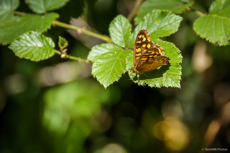 Una mariposa al sol