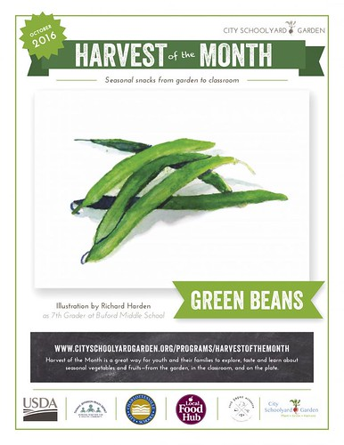 Harvest of the Month Green Beans Poster