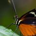 Zoo Rotterdam butterfly