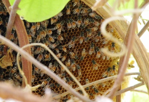 Growing bee hive | by Mink