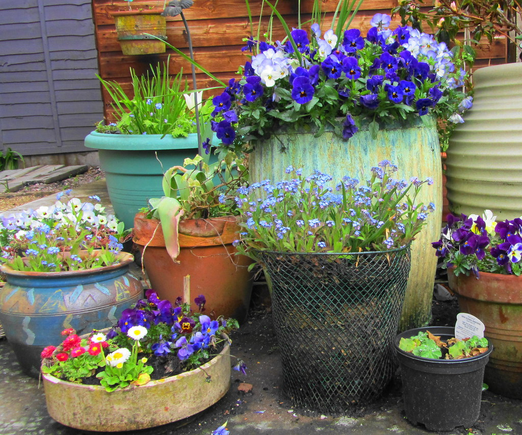 Recycled garden containers none of these containers were b flickr - Recycled containers for gardening ...