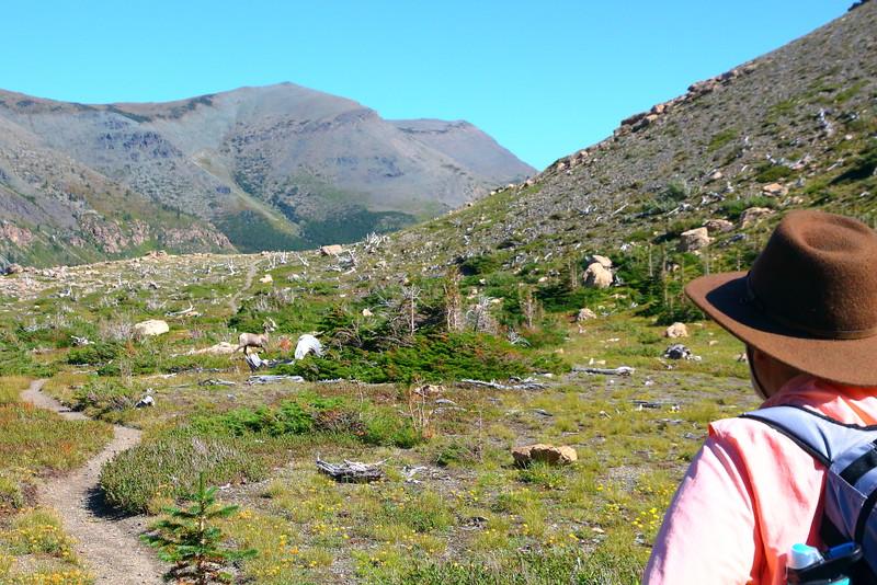 IMG_8380 Firebrand Pass Trail