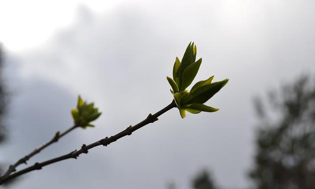 kevät02