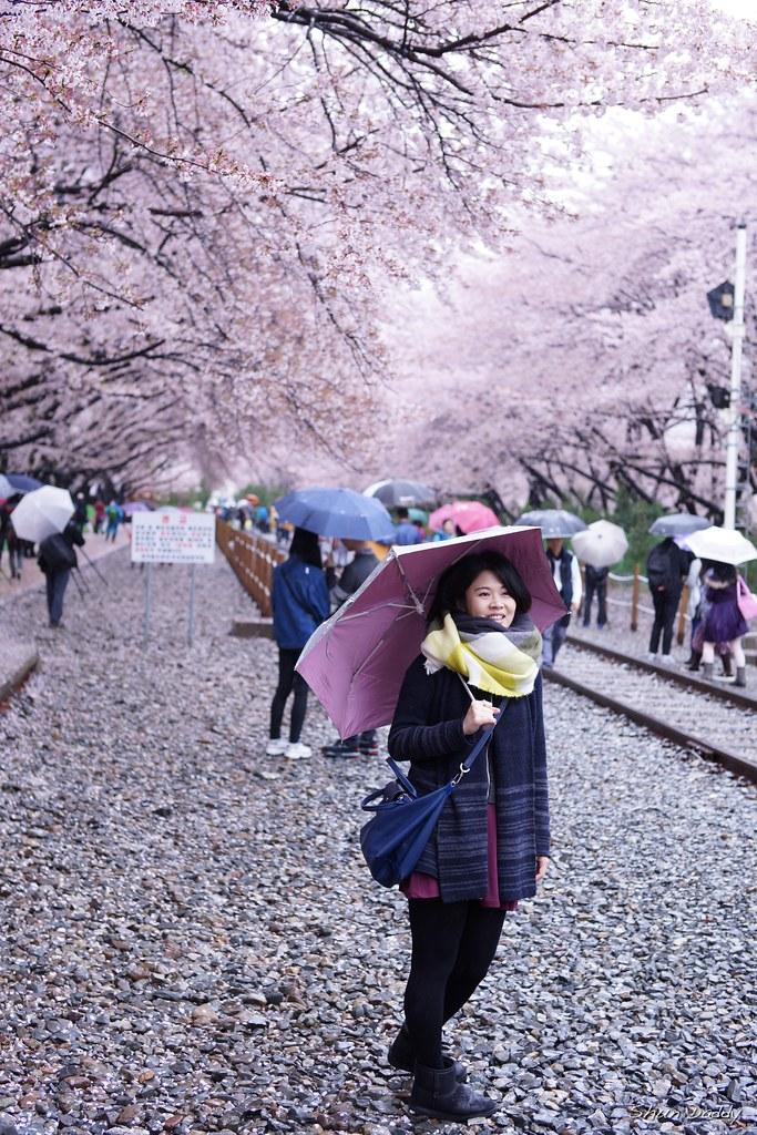 Lady under Sakura
