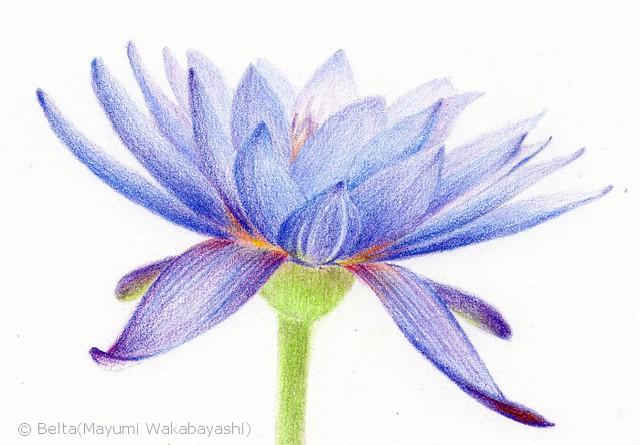 2015_04_15_lotus_05_s