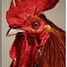 Retrato de un gallo