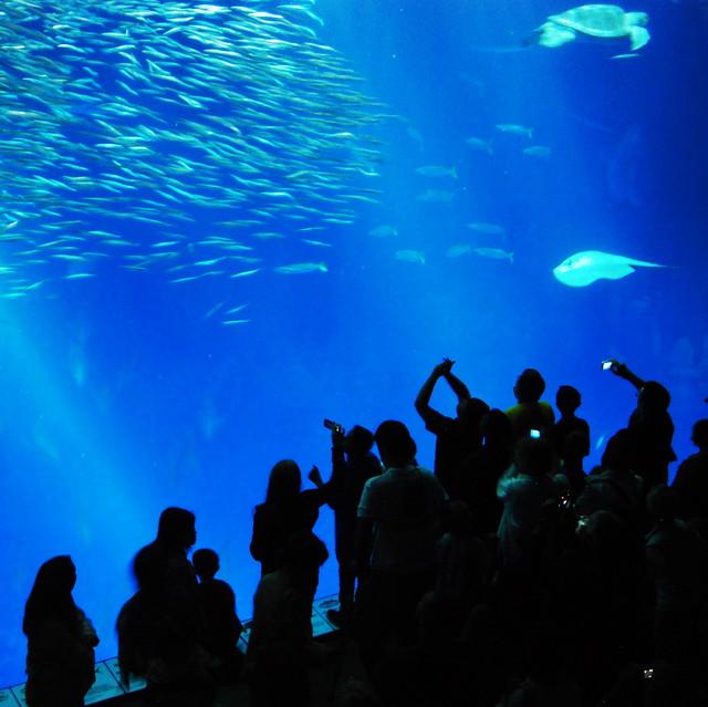 Open Sea Tank Monterey Aquarium Flickr Photo Sharing