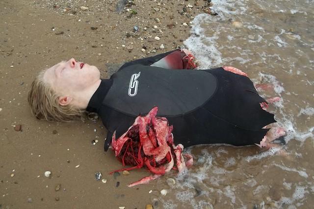 Tiger shark attack victim - photo#4