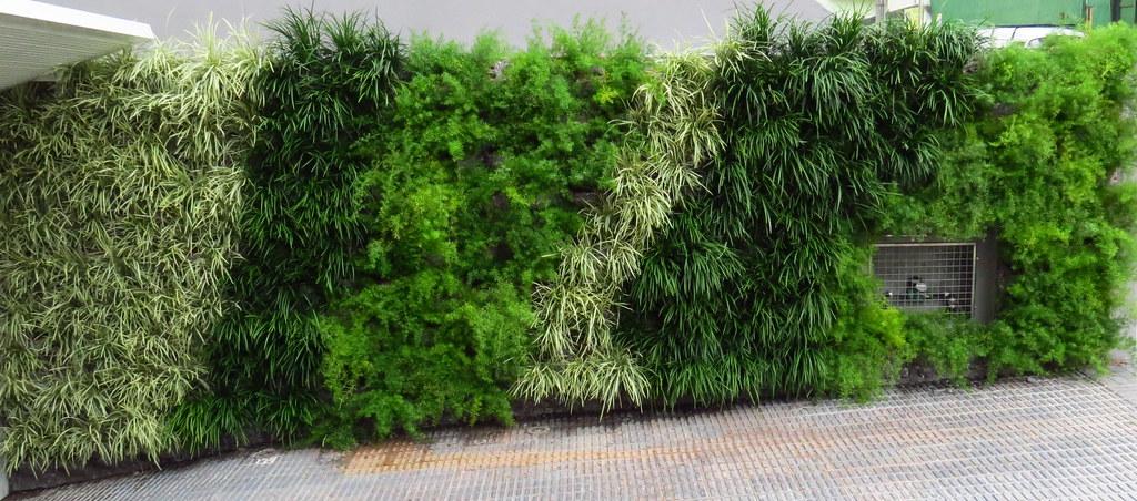 jardim vertical externo:Jardim Vertical externo – liriope verde e variegata com as…