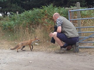 An Evening With Young Master Fox | by julian sawyer - Purbeck Footprints