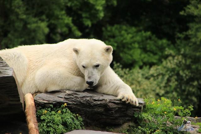 Tierpark Berlin 10.05.2015  128