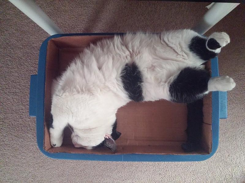 The Cat Life - Snapshots