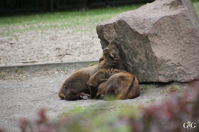 Tierpark Friedrichsfelde 10.05.201540