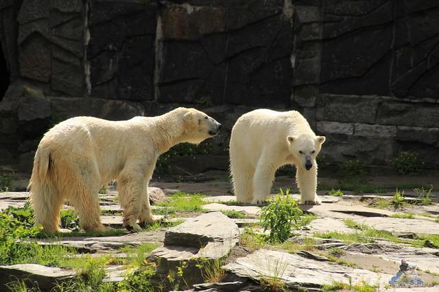 Tierpark Berlin 17.05.2015 47