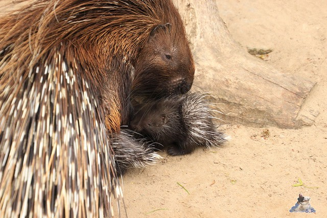 Tierpark Berlin 10.05.2015  114