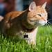 Yossarian the (Full Frame!) Cat