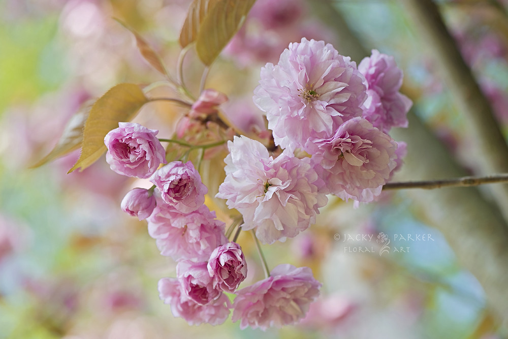 Photograph Cherry Delight by Jacky Parker
