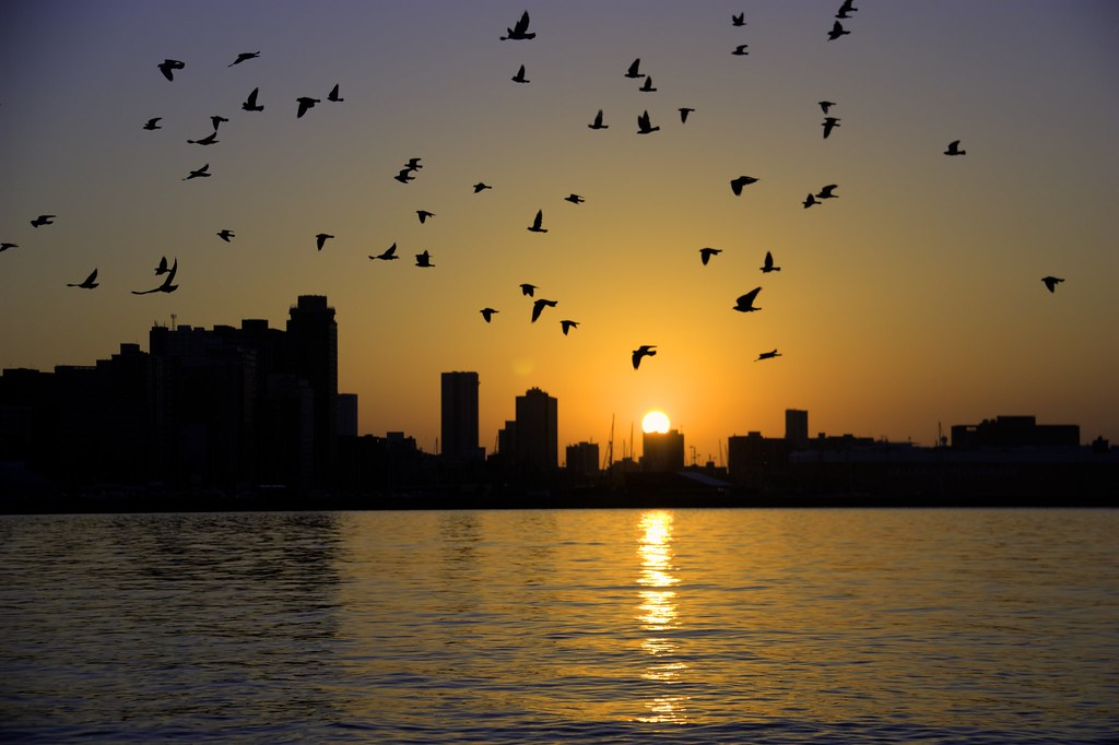 Birds Flying Sunrise Sunrise Birds Flying