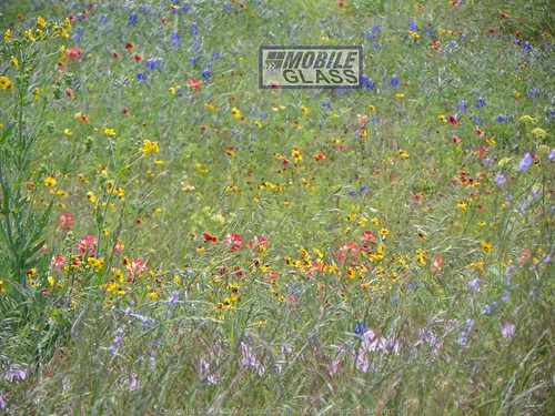 Nice Field of Flowers in Volente