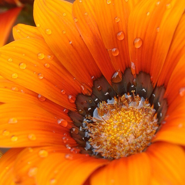 Beautiful orange flower. #flowers #lightstalking #tagsforlikes
