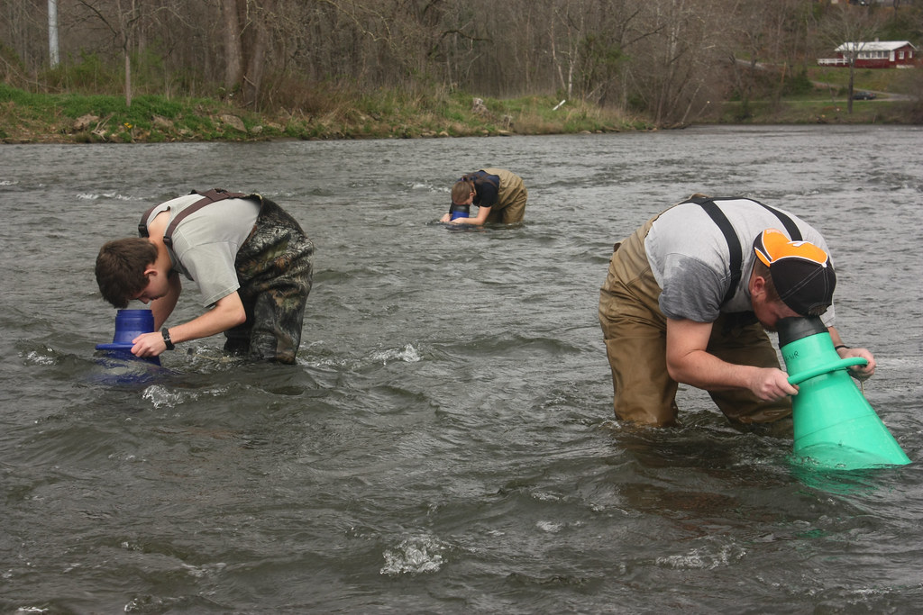 the endangered appalachian elktoe Water quality in the upper little tenneessee river and its potential effects on the appalachian elktoe mussel (alasmidonta raveneliana) by jason d jarvis.