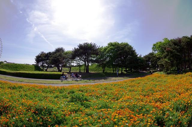 国営ひたち海浜公園 15.05.11